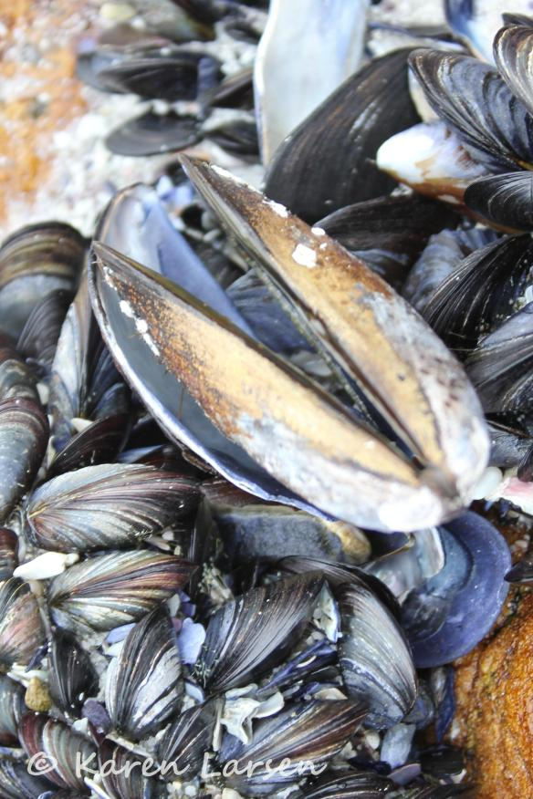 Black mussels - Scarborough