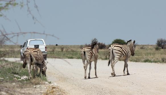 A family of Burchell's Zebra