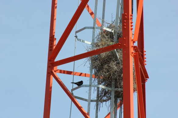 Birds nest in a communication tower